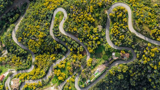 Pause sous les pins